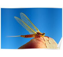 Mayfly Resting on My Finger Before the Swarm Poster