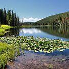 Lily Pond, Yellowstone NP by Teresa Zieba
