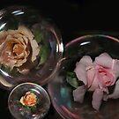 Roses floating by julie anne  grattan