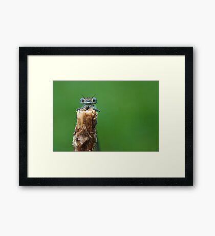 Damselfly in natural light Framed Print