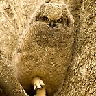 Baby spotted Eagle Owl by Selsong