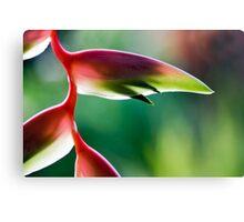 Tropicana - Sexy Pink Flower Canvas Print