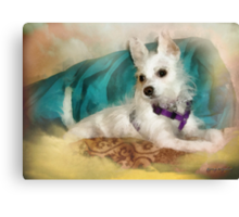 Miss Maggie May - 5 Mos. Old Canvas Print