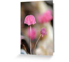 Marasmius pulcherripes  Greeting Card
