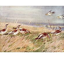 Birds in a Field Photographic Print