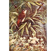 Beautiful Sedge Warbler Art Photographic Print