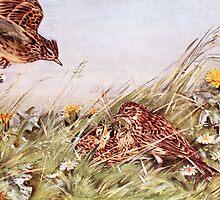 Skylarks In Field Scene by goldenmenagerie
