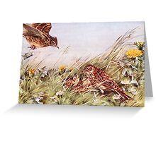 Skylarks In Field Scene Greeting Card