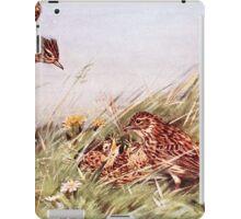 Skylarks In Field Scene iPad Case/Skin