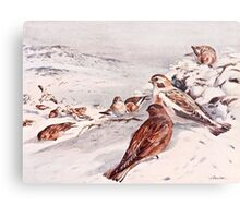 Winter Scene with Snow Buntings Metal Print