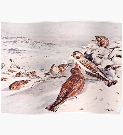 Winter Scene with Snow Buntings Poster