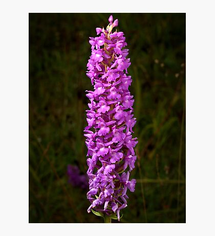 Fragrant Orchid Photographic Print