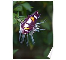 Wingspan - Common Eggfly Butterfly Poster