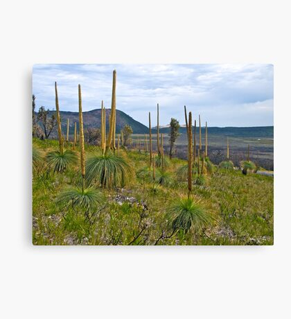 Rebirth; after the bushfires, Wilsons Promontory Canvas Print