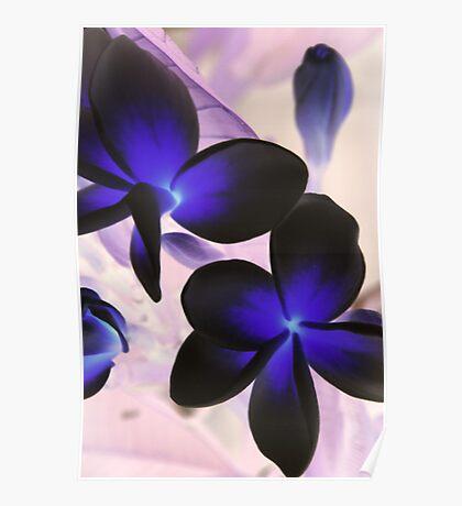 frangipanis in negative Poster
