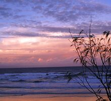 Sunset at Coolum Beach, Sunshine Coast, QLD by Darsha Gillmore