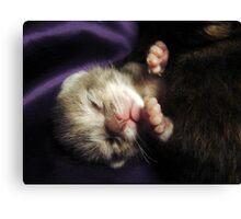 Brand New Baby Kitty Canvas Print