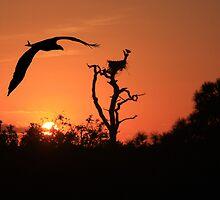 RETURNING BALD EAGLE by TomBaumker
