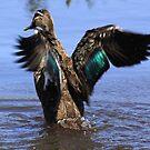water off a ducks back by john  Lenagan