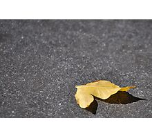 lonley little old leaf Photographic Print