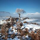 Mist and Ice by Jeanie