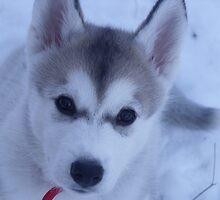 Tikaani's first taste of snow by Keri Russell