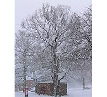Trees and Post Box in the Snow Photographic Print