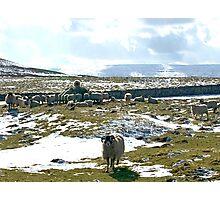 Winter Feeding Photographic Print