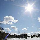 Winter Sun by Antanas