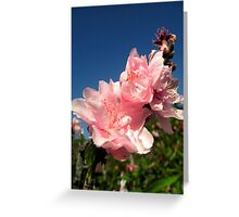 Spring Peach Blossoms Greeting Card