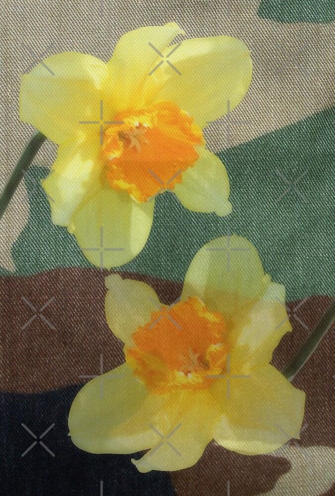 Bi Colour Daffodils by Avril Harris