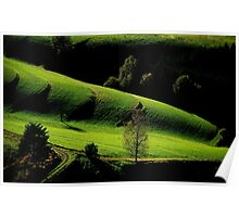 The Black Forest in Autumn..........Late Afternoon Poster