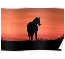 Horse at Sunset  Buckinghamshire  UK Poster