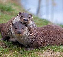 Otterly in Love (European Otters) by Krys Bailey
