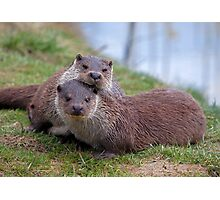 Otterly in Love (European Otters) Photographic Print