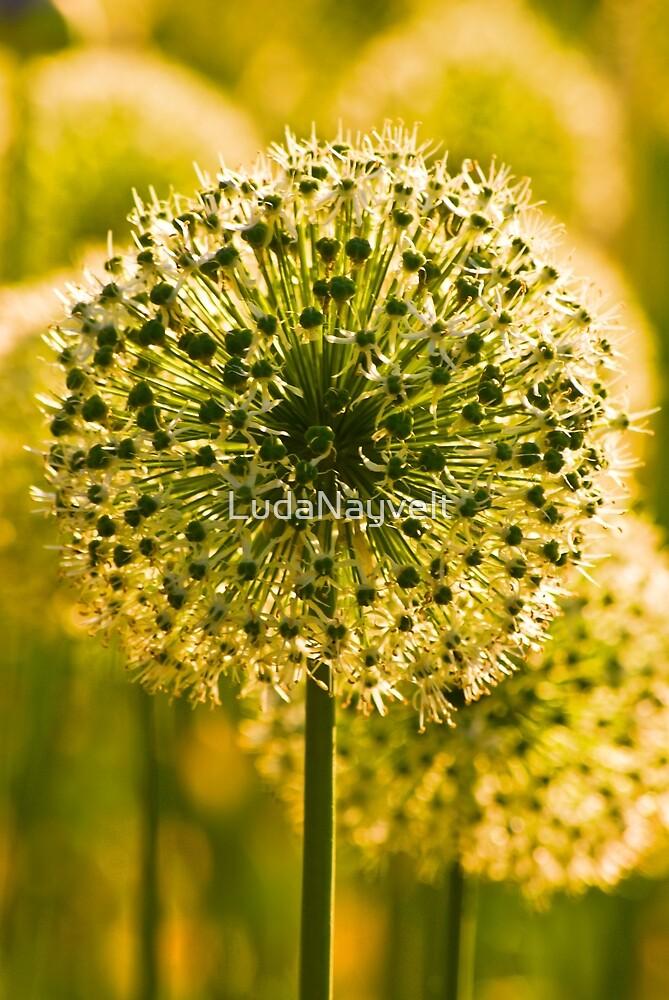 Green by LudaNayvelt