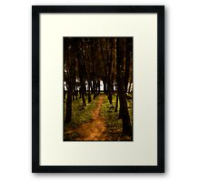 Forrest paths Framed Print