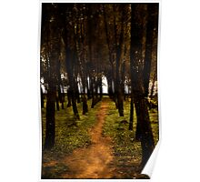 Forrest paths Poster