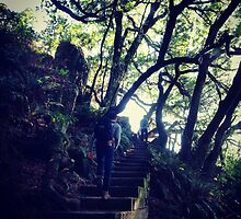 Muir Woods, SF by omhafez