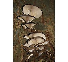 Lovely Bunch of Mushrooms Photographic Print