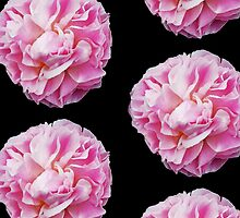 Pink Peonies by appfoto