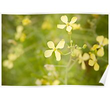 Yellow Flowers Green grass Poster