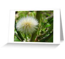 Flower Macro-5 Greeting Card