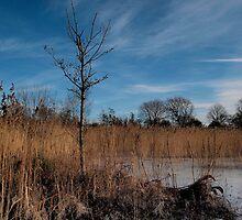 Winter at Walton Lake - Buckinghamshire, UK by Nick Bland