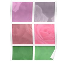 Pink Roses in Anzures 2 Abstract Rectangles 1 Poster