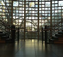 Shields Library by omhafez