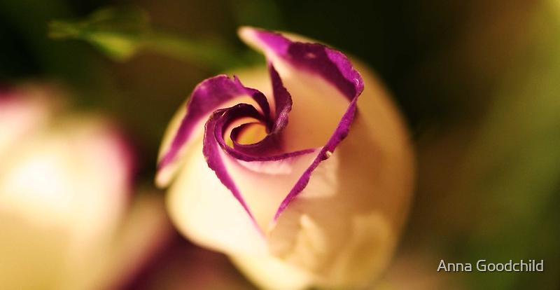 plump lizianthus spiralling open by Anna Goodchild