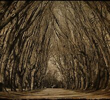 where the trees still whisper by Ingz