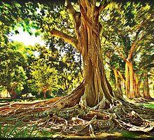 Roots by LudaNayvelt