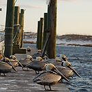 Pelicans on the lookout by GFORCE